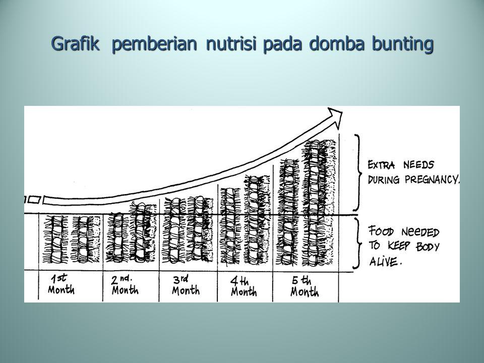 Grafik pemberian nutrisi pada domba bunting