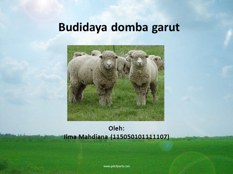 Budidaya domba garut Oleh: Ilma Mahdiana (115050101111107)