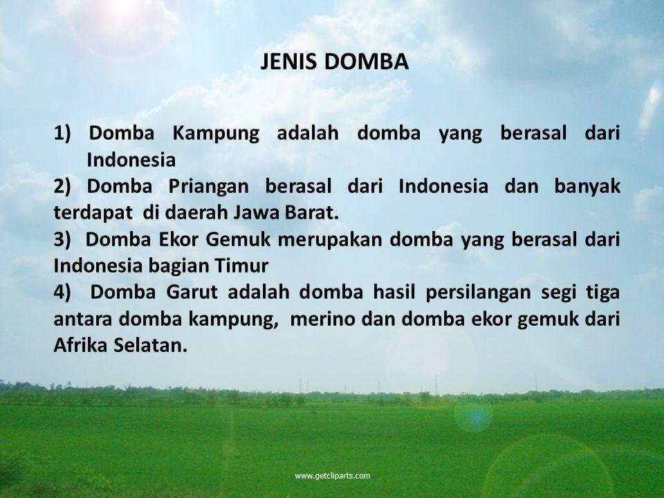 JENIS DOMBA 1) Domba Kampung adalah domba yang berasal dari Indonesia