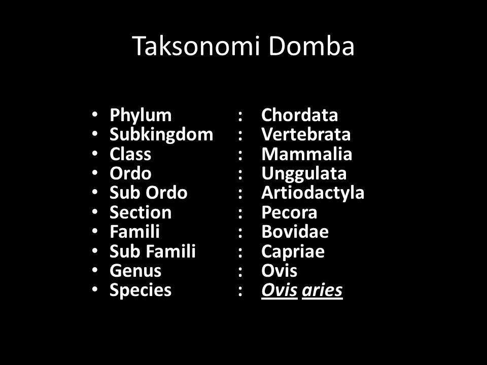 Taksonomi Domba Phylum : Chordata Subkingdom : Vertebrata