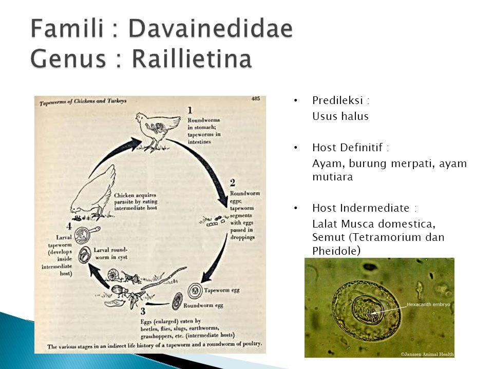 Famili : Davainedidae Genus : Raillietina