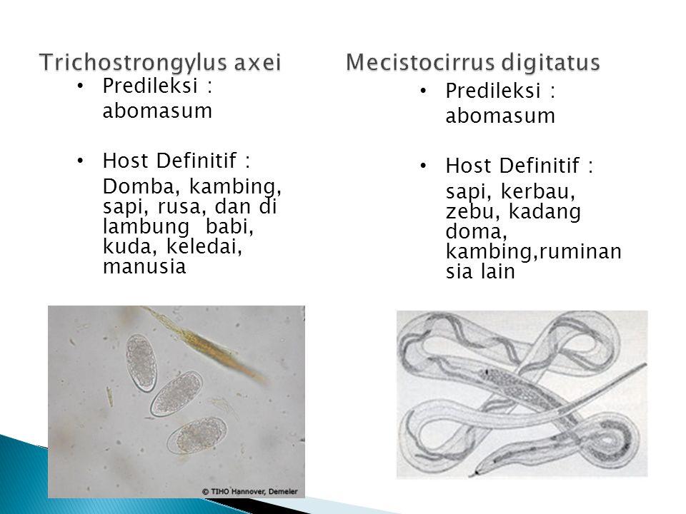 Trichostrongylus axei Mecistocirrus digitatus