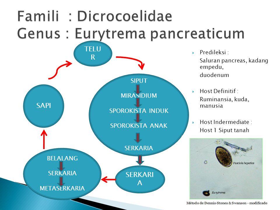 Famili : Dicrocoelidae Genus : Eurytrema pancreaticum