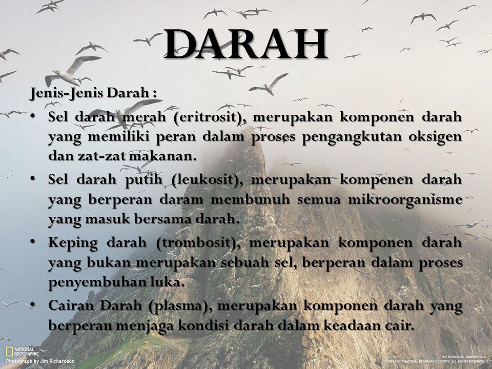 DARAH Jenis-Jenis Darah :