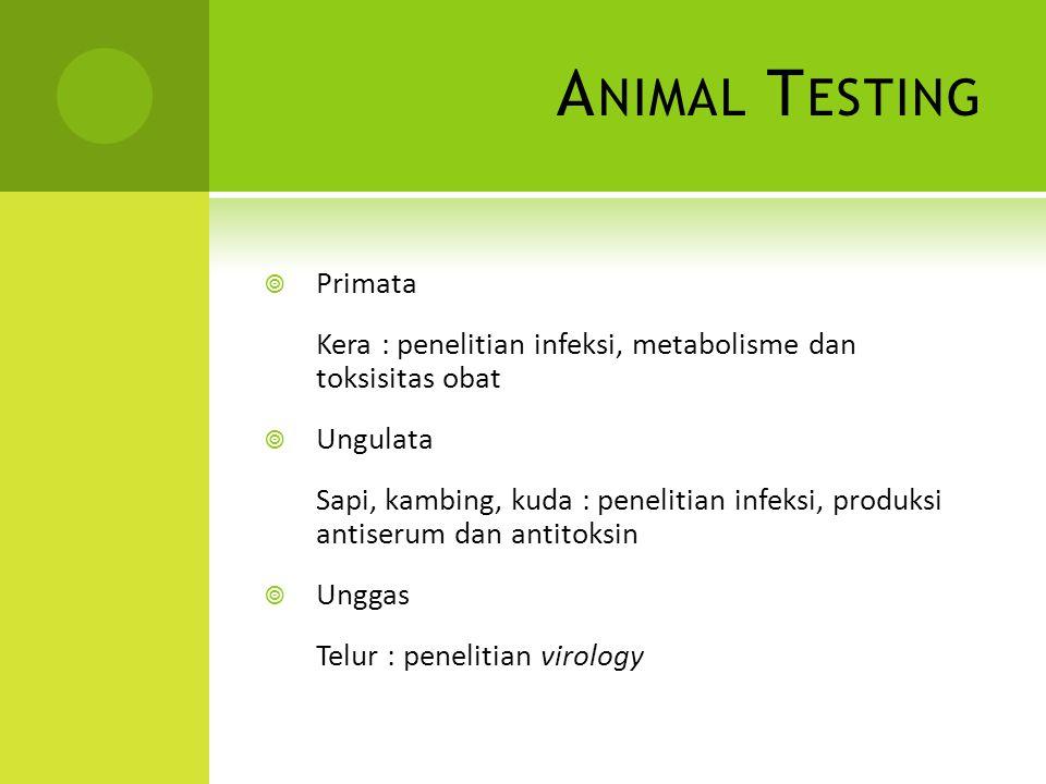 Animal Testing Primata