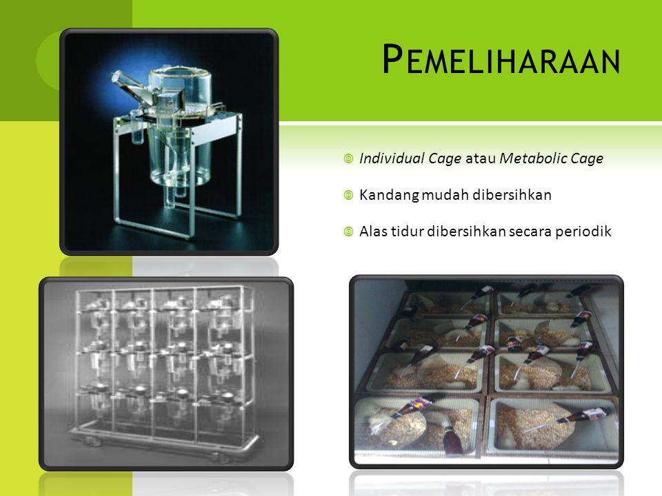 Pemeliharaan Individual Cage atau Metabolic Cage