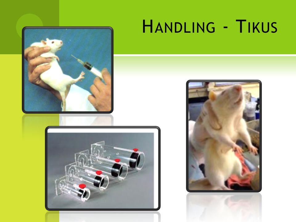 Handling - Tikus