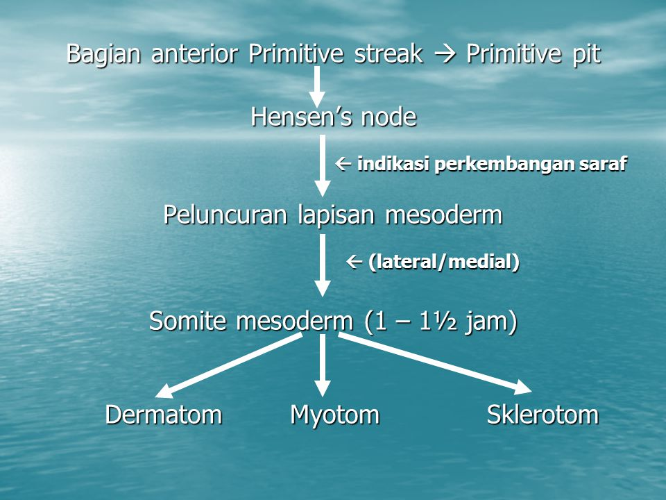 Bagian anterior Primitive streak  Primitive pit Hensen's node