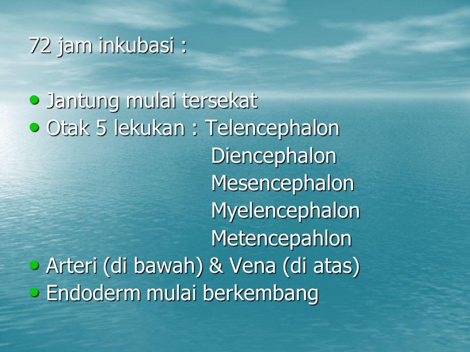72 jam inkubasi : Jantung mulai tersekat. Otak 5 lekukan : Telencephalon. Diencephalon. Mesencephalon.