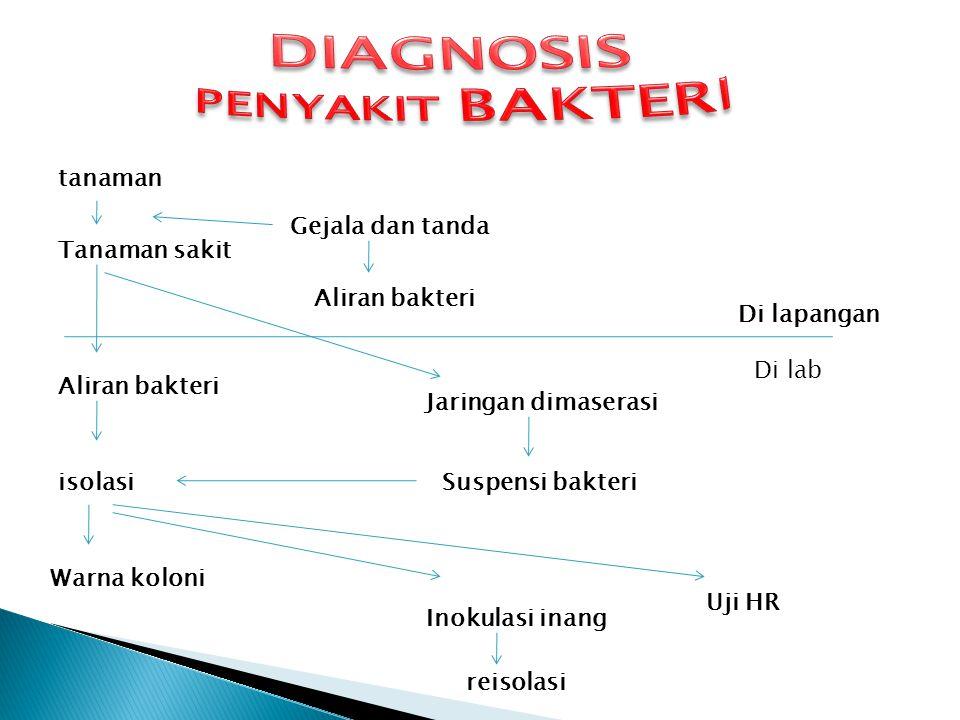 DIAGNOSIS PENYAKIT BAKTERI