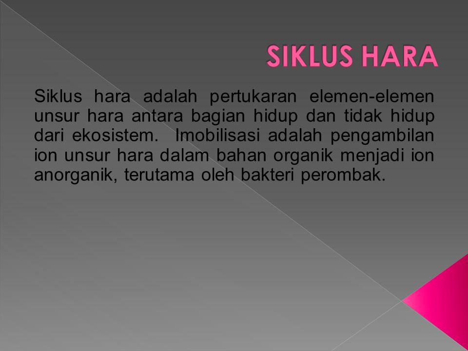 SIKLUS HARA