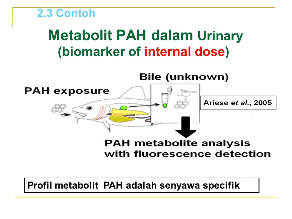 Metabolit PAH dalam Urinary (biomarker of internal dose)