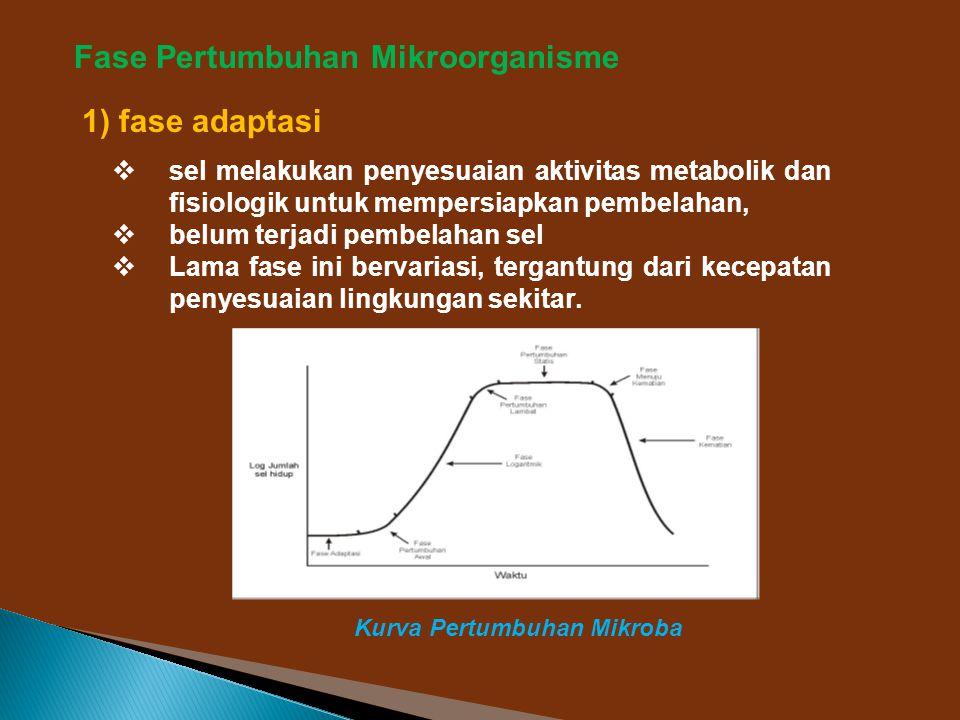 Fase Pertumbuhan Mikroorganisme