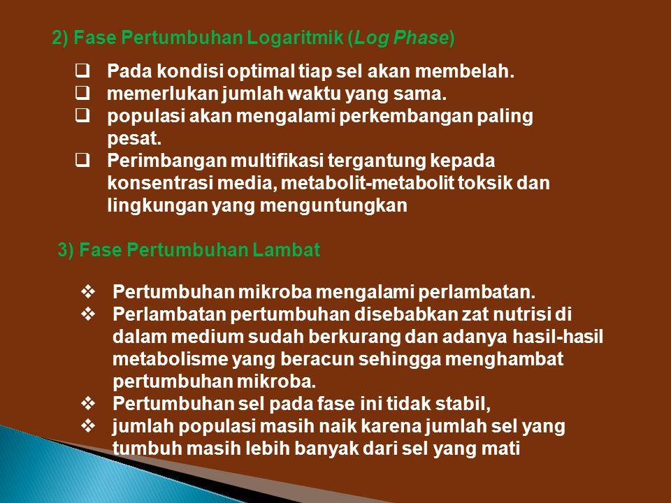 2) Fase Pertumbuhan Logaritmik (Log Phase)