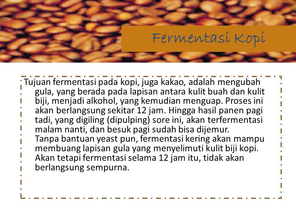 Fermentasi Kopi
