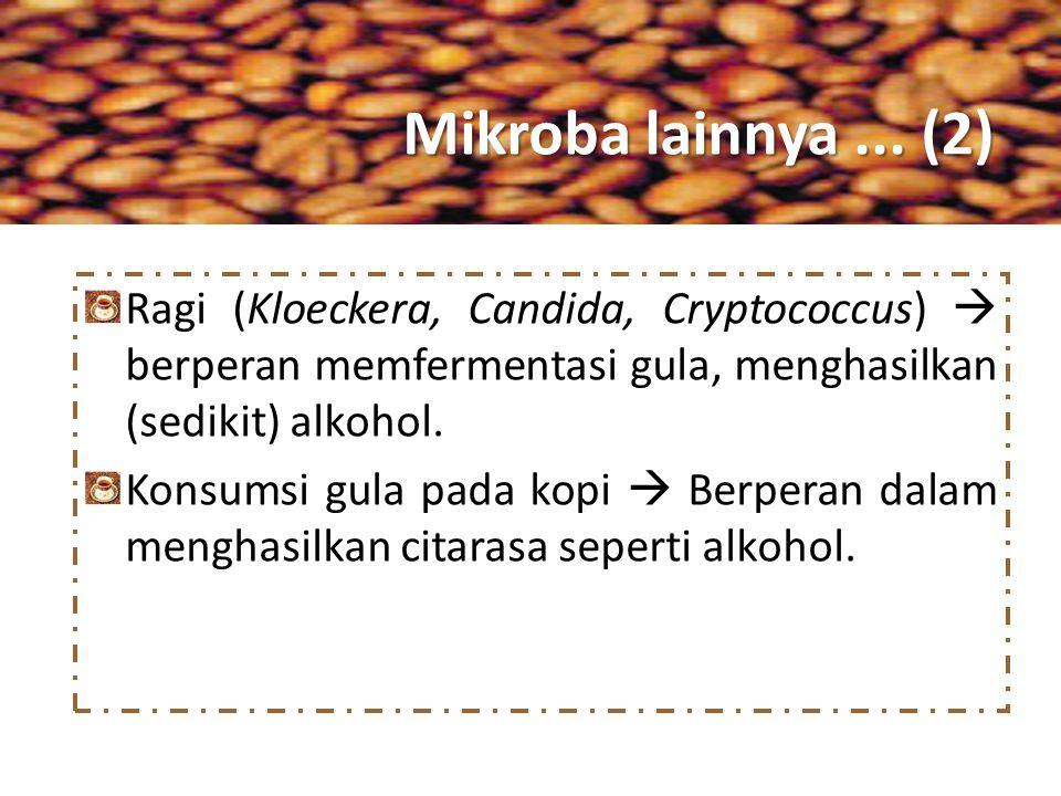 Mikroba lainnya ... (2) Ragi (Kloeckera, Candida, Cryptococcus)  berperan memfermentasi gula, menghasilkan (sedikit) alkohol.