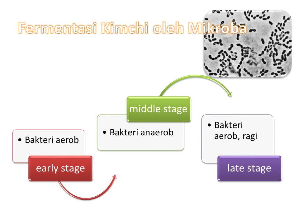 Fermentasi Kimchi oleh Mikroba