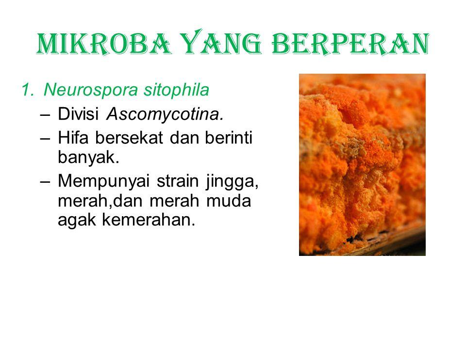 Mikroba yang berperan Neurospora sitophila Divisi Ascomycotina.