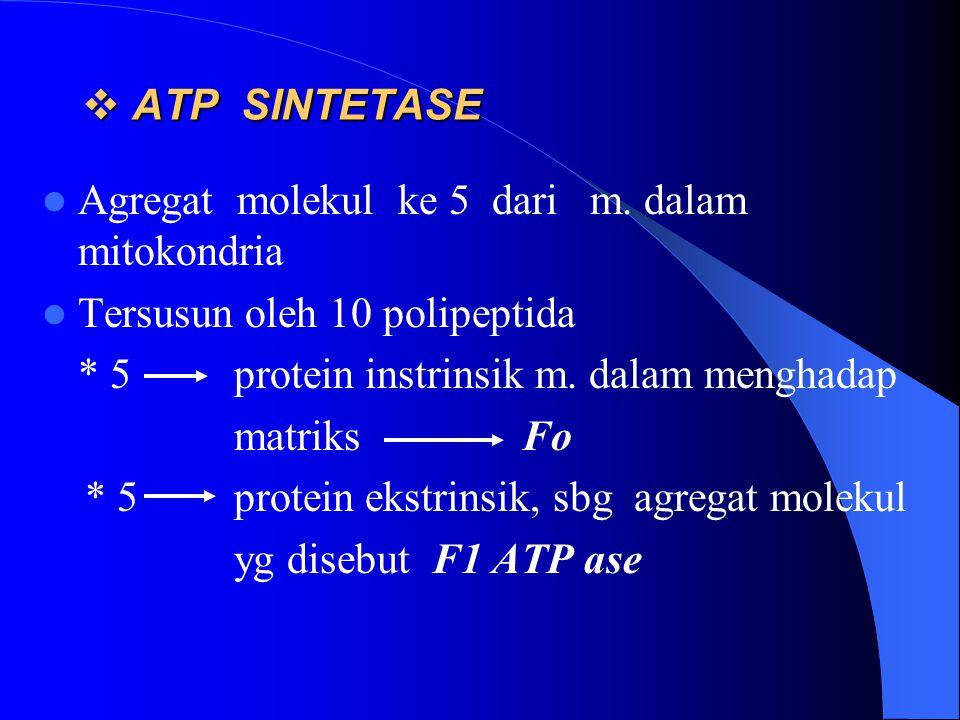 ATP SINTETASE Agregat molekul ke 5 dari m. dalam mitokondria. Tersusun oleh 10 polipeptida. * 5 protein instrinsik m. dalam menghadap.