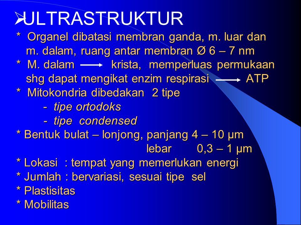 ULTRASTRUKTUR. Organel dibatasi membran ganda, m. luar dan m