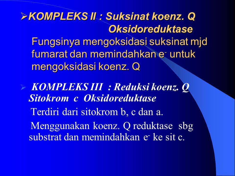 KOMPLEKS II : Suksinat koenz. Q