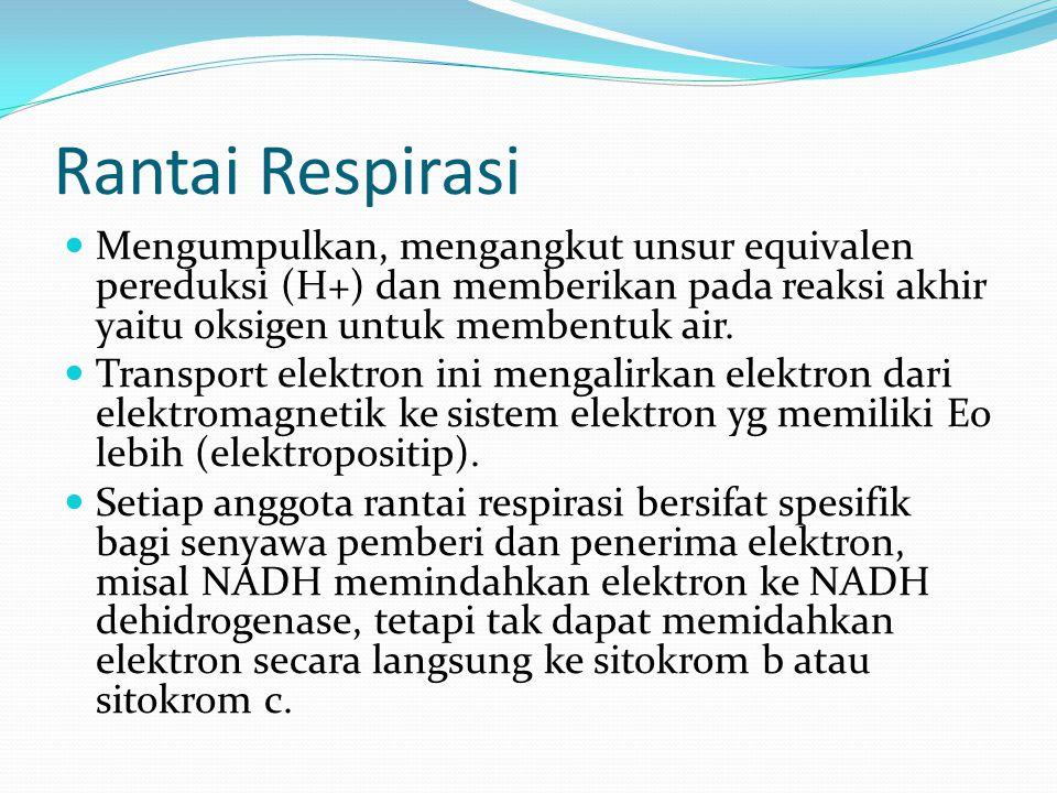 Rantai Respirasi Mengumpulkan, mengangkut unsur equivalen pereduksi (H+) dan memberikan pada reaksi akhir yaitu oksigen untuk membentuk air.