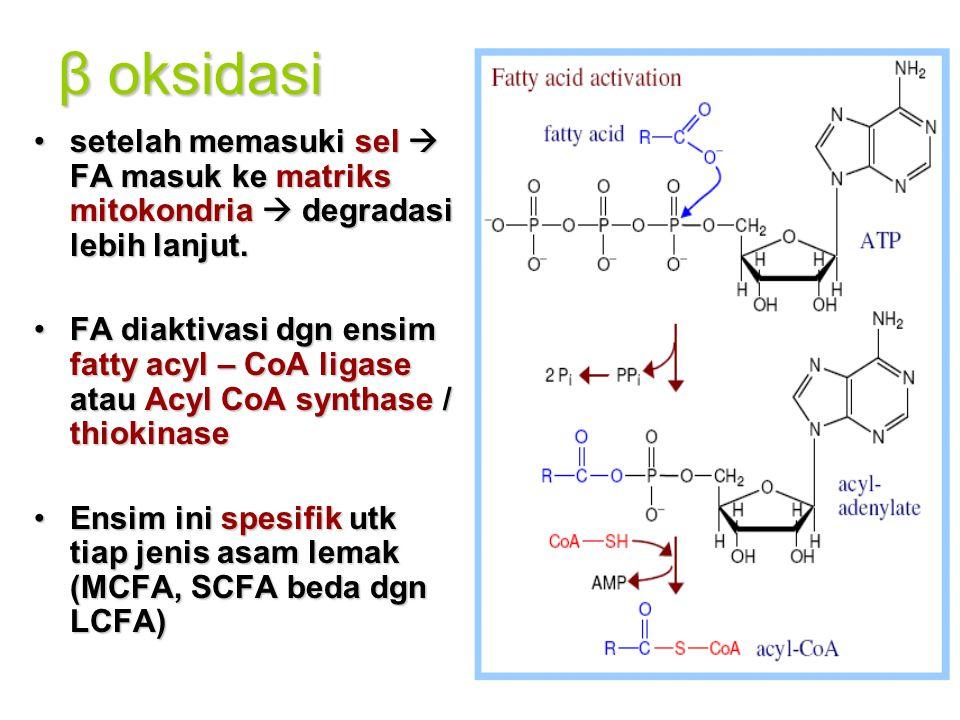 β oksidasi setelah memasuki sel  FA masuk ke matriks mitokondria  degradasi lebih lanjut.