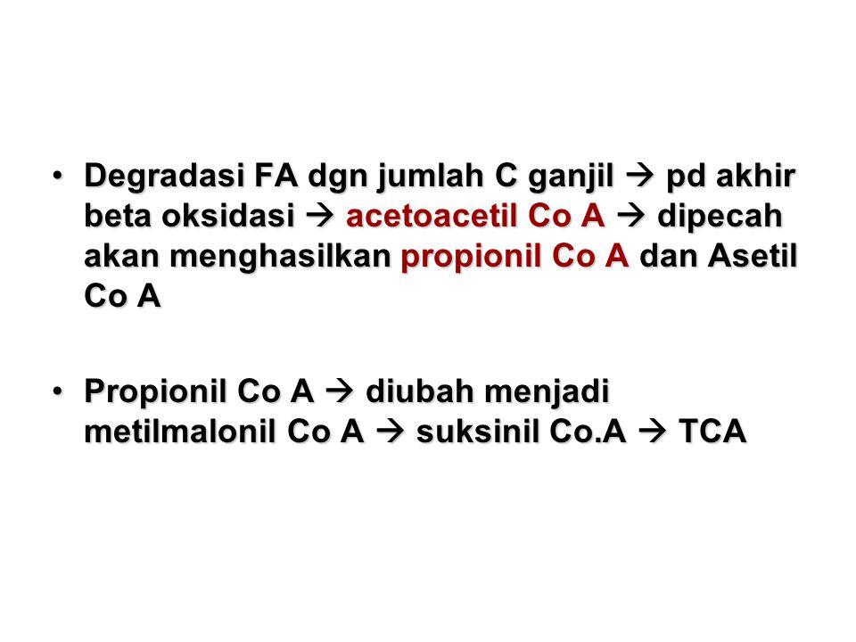 Degradasi FA dgn jumlah C ganjil  pd akhir beta oksidasi  acetoacetil Co A  dipecah akan menghasilkan propionil Co A dan Asetil Co A