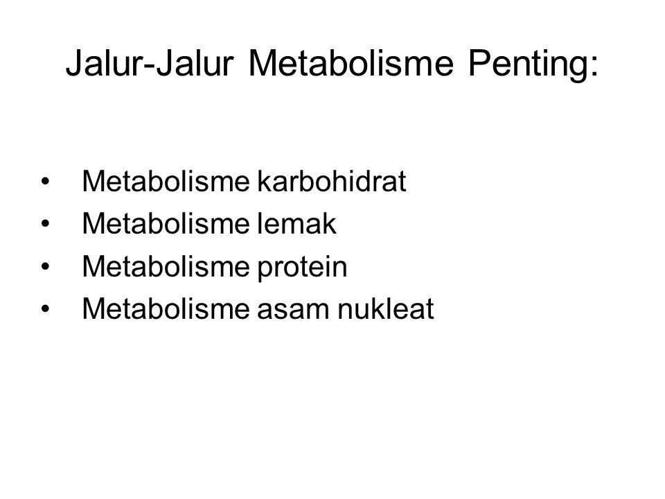 Jalur-Jalur Metabolisme Penting: