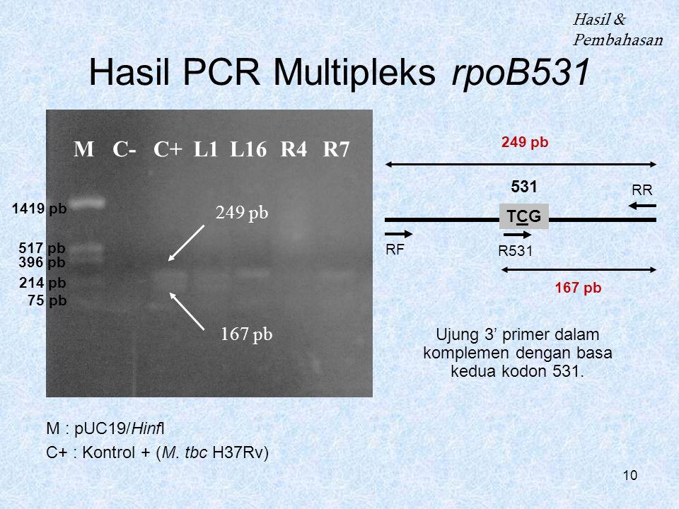 Hasil PCR Multipleks rpoB531
