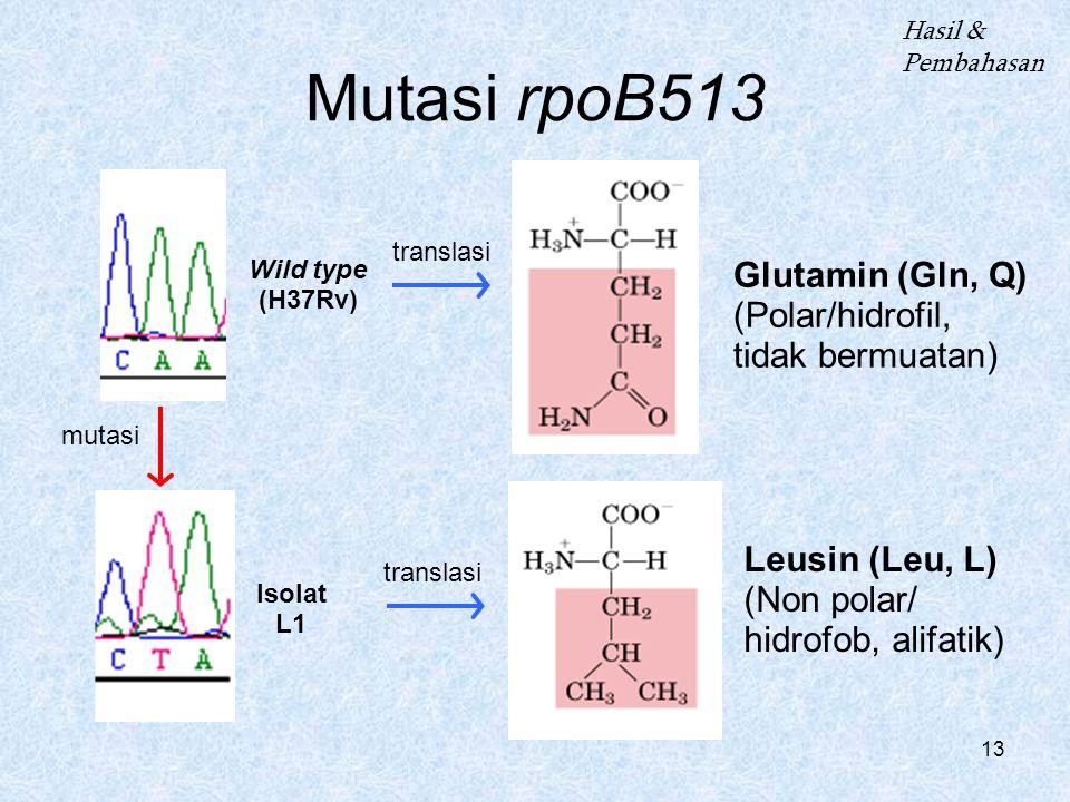 Mutasi rpoB513 Glutamin (Gln, Q) (Polar/hidrofil, tidak bermuatan)
