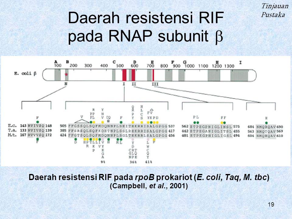 Daerah resistensi RIF pada RNAP subunit b