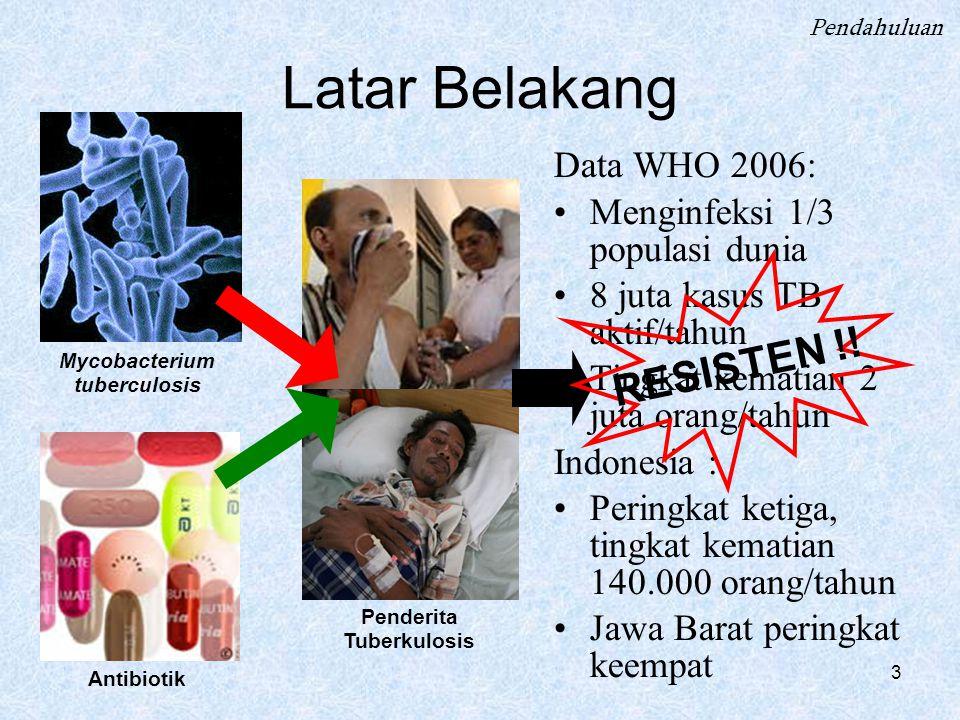 Mycobacterium tuberculosis Penderita Tuberkulosis
