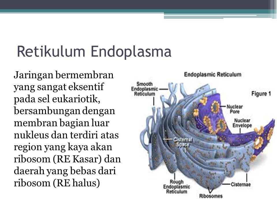 Retikulum Endoplasma