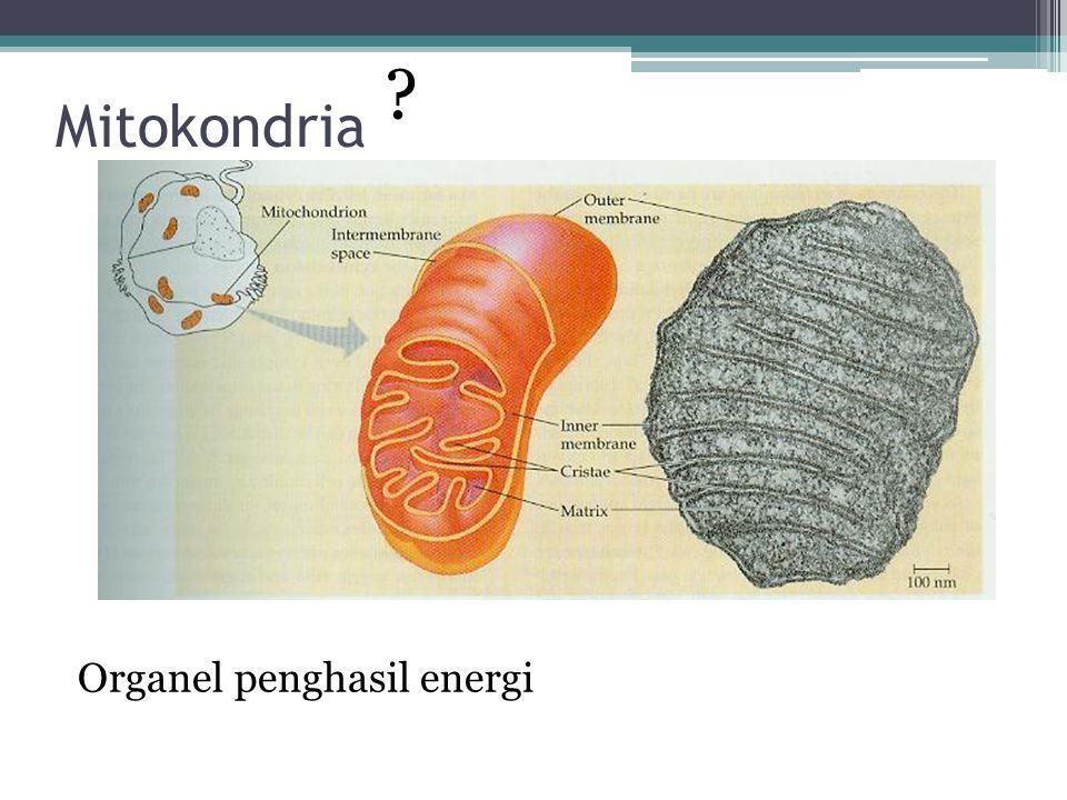 Mitokondria Organel penghasil energi