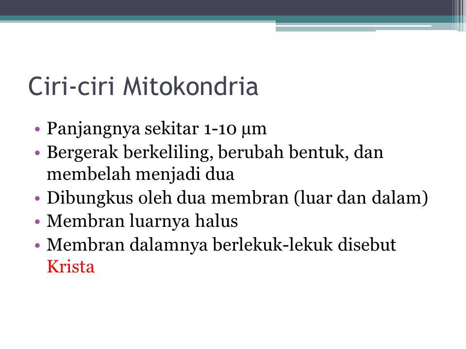 Ciri-ciri Mitokondria