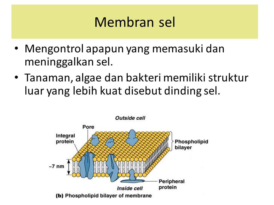 Membran sel Mengontrol apapun yang memasuki dan meninggalkan sel.