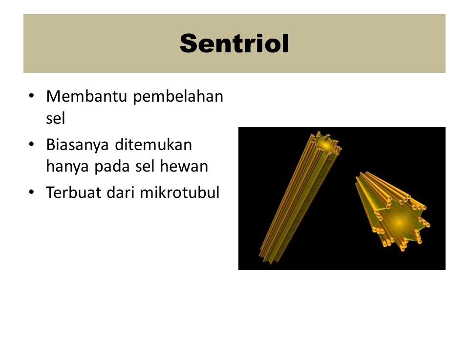 Sentriol Membantu pembelahan sel