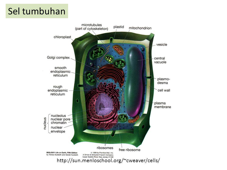 Sel tumbuhan http://sun.menloschool.org/~cweaver/cells/