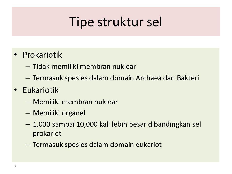 Tipe struktur sel Prokariotik Eukariotik