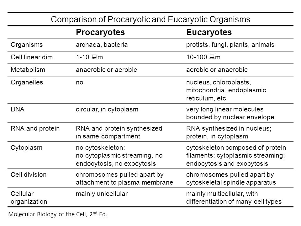 Comparison of Procaryotic and Eucaryotic Organisms