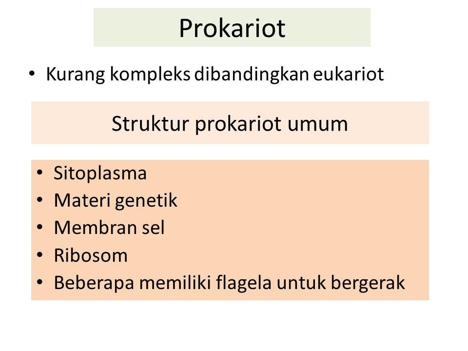Struktur prokariot umum