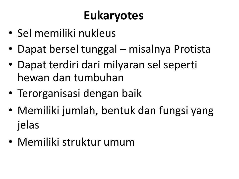 Eukaryotes Sel memiliki nukleus