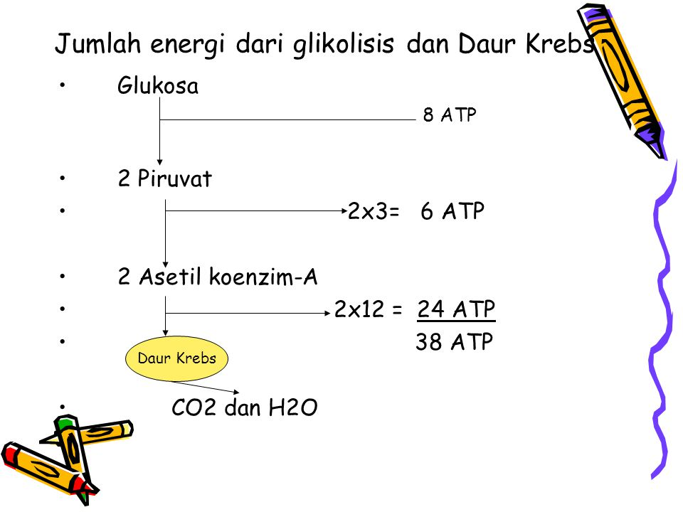 Jumlah energi dari glikolisis dan Daur Krebs