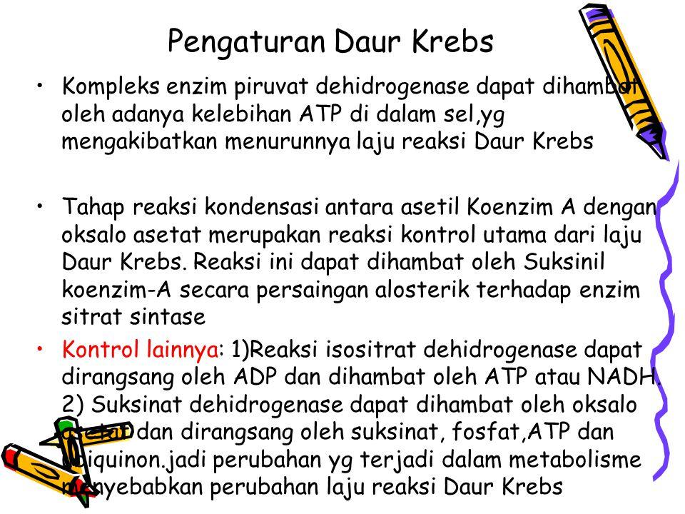 Pengaturan Daur Krebs
