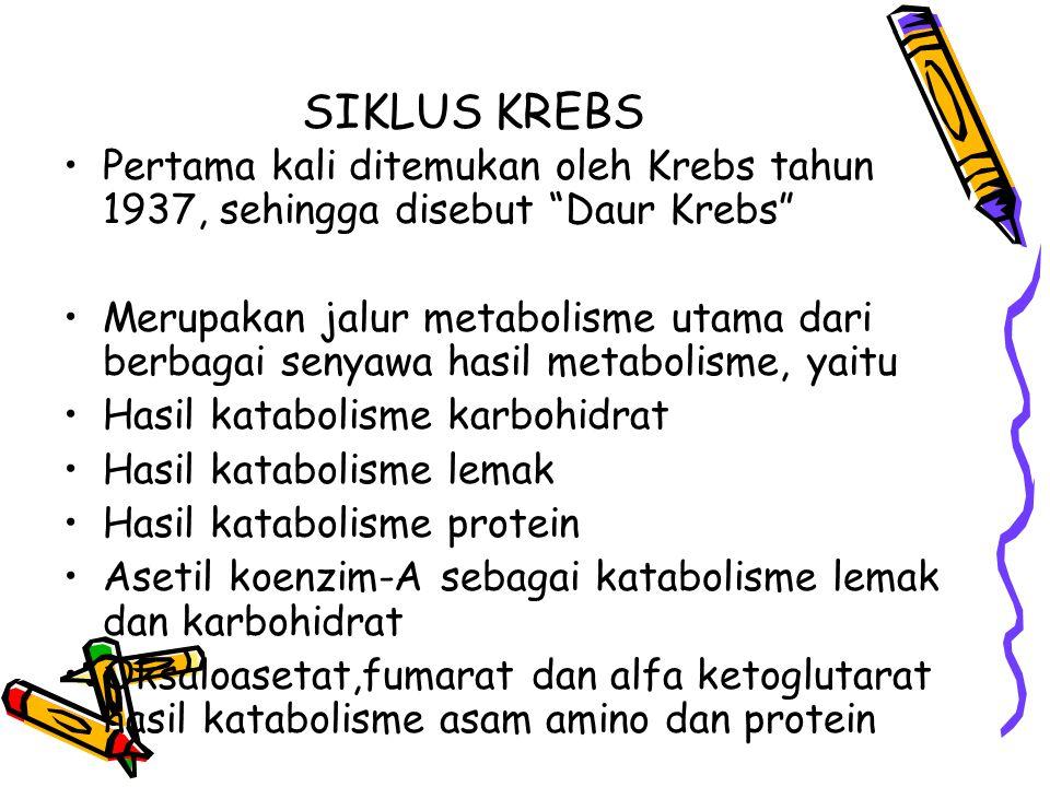 SIKLUS KREBS Pertama kali ditemukan oleh Krebs tahun 1937, sehingga disebut Daur Krebs