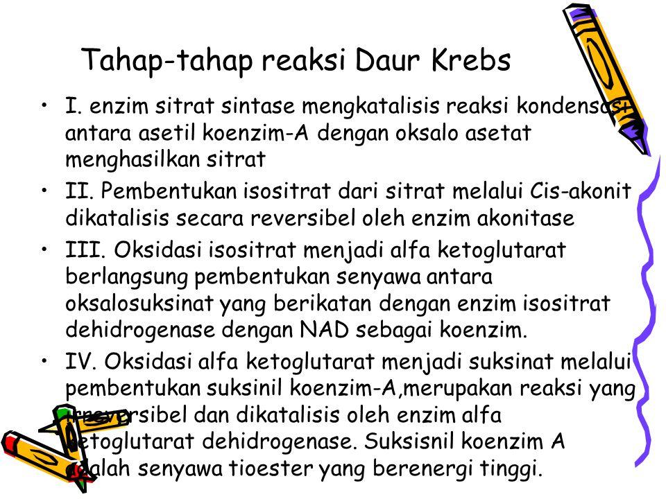 Tahap-tahap reaksi Daur Krebs