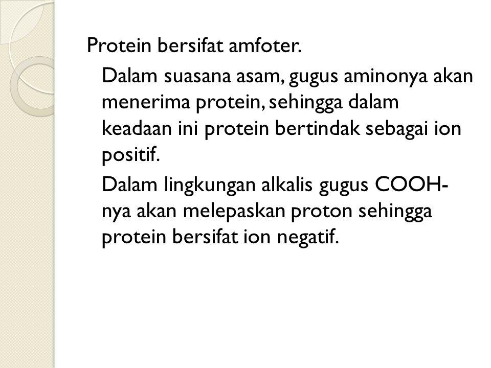 Protein bersifat amfoter