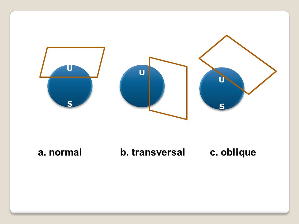 U S U U S a. normal b. transversal c. oblique