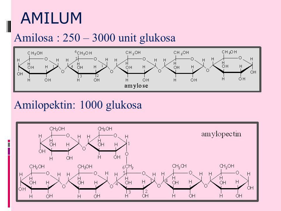 AMILUM Amilosa : 250 – 3000 unit glukosa Amilopektin: 1000 glukosa